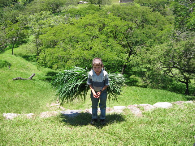 jongetje met gras