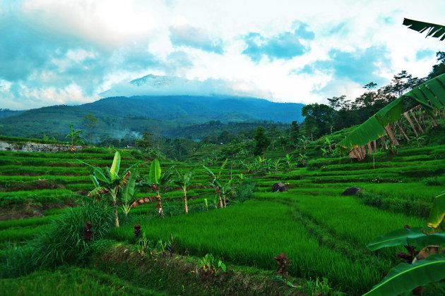 Ngawi - Oost Java