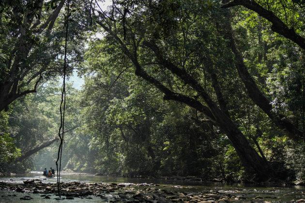 Jungle van Maleisië