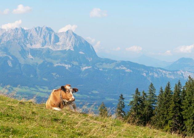 Oostenrijks landschap