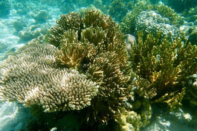 Onaangetast koraal