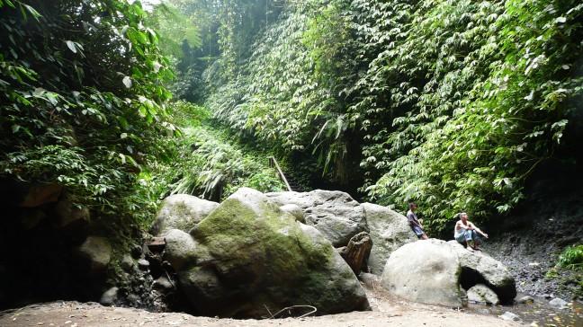 jungle lombok