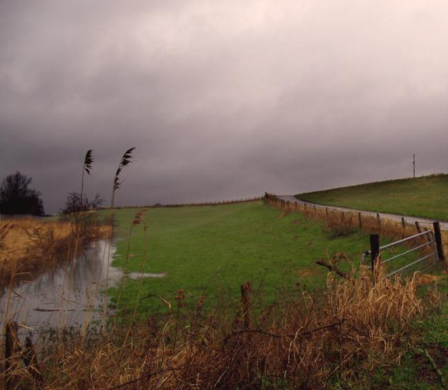 Regen in de polder
