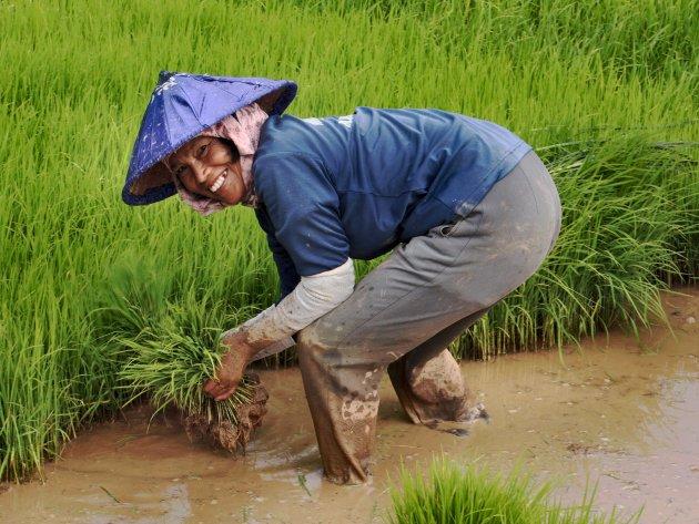Rijst met een smile