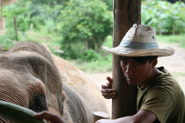 Mahout Elephant Nature Park