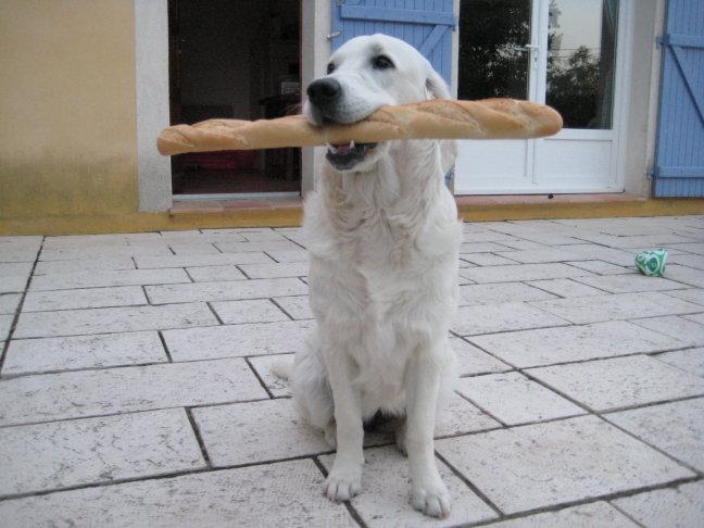 Du pain et la chein...