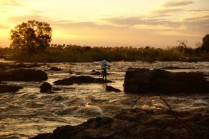 Visser bij de Victoria Falls