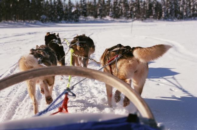 met sledehonden over een bevroren meer