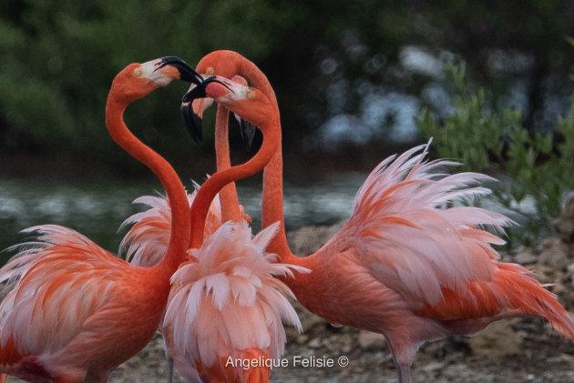 Saltlakes & Flamingos