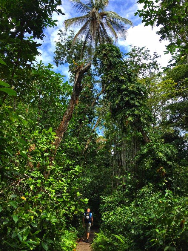 Jungle van Costa Rica