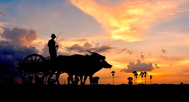 Het plattelandsleven in de buurt van Siem Riep