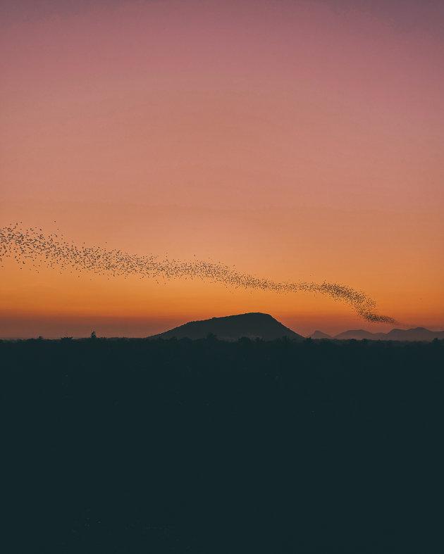 Vleermuizen verlaten hun grot bij Phnom Sampou