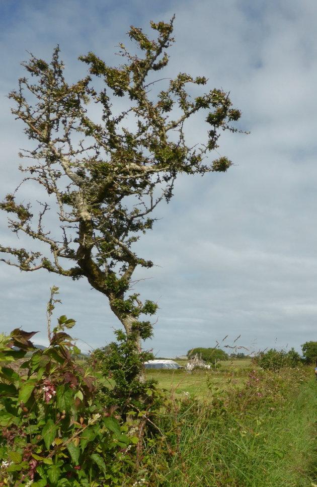 De eenzame boom 3