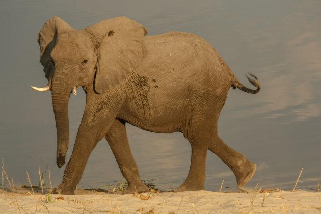 Op deze plek was een olifante kudde van 200 stuks
