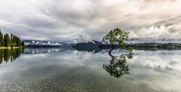 Eenzame boom in het meer van Wanaka