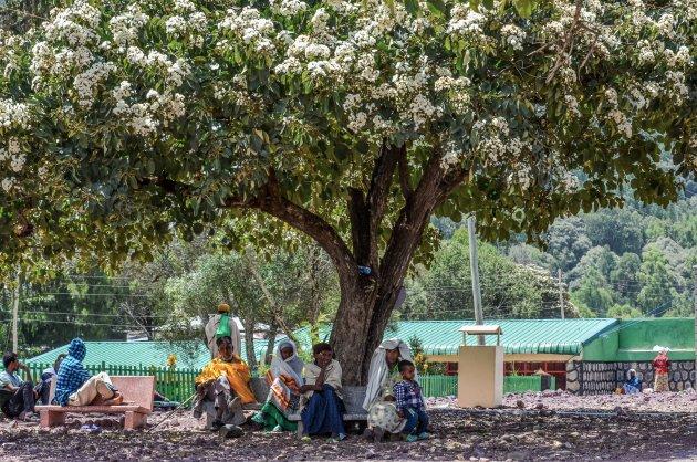 Eenzaam-maar-niet-alleen-boom