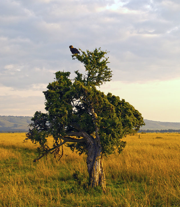 Eenzame boom 10