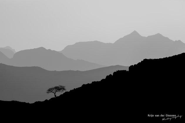 Eenzame boom in Oman