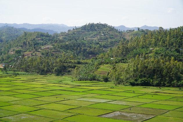 Rwanda is verfrissend groen
