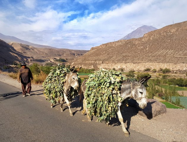 Mountainbiken in Arequipa