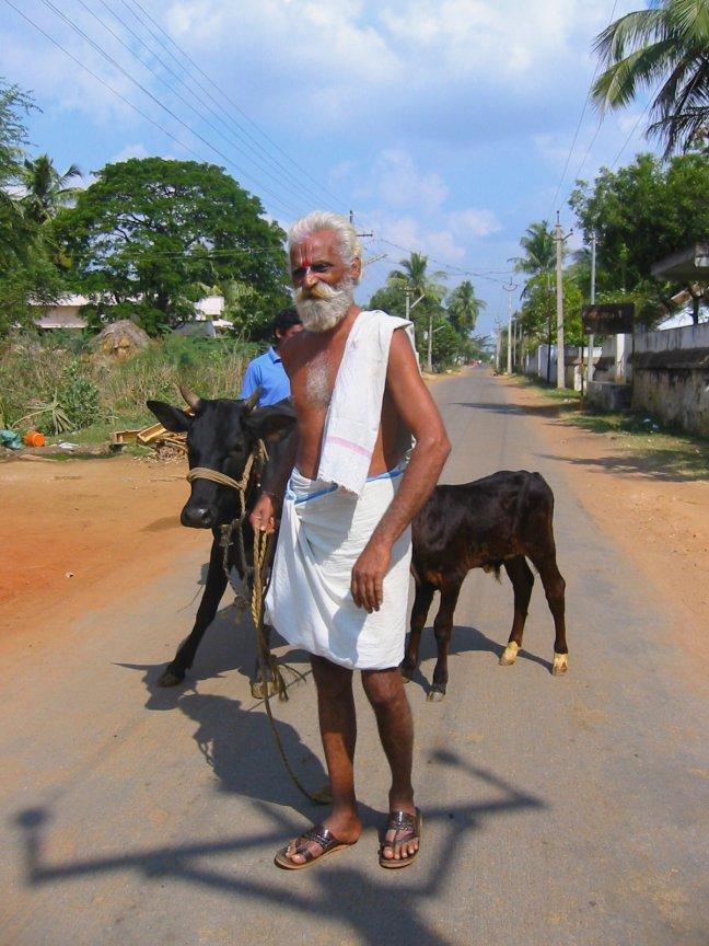 Man met koe