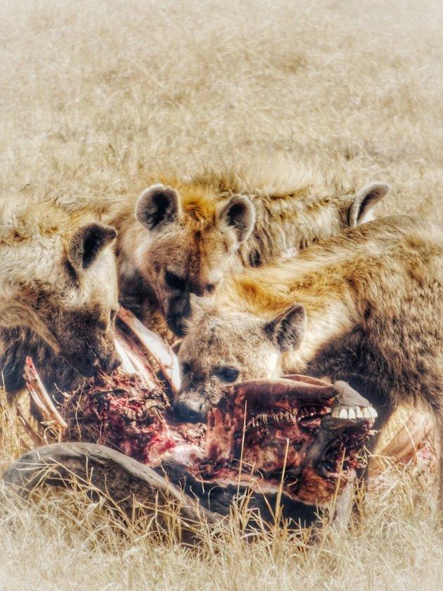 Hyena's verslinden buffel