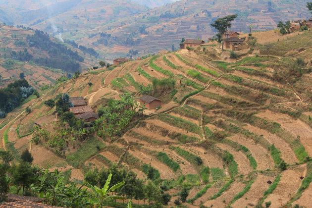 terrasvelden in Rwanda