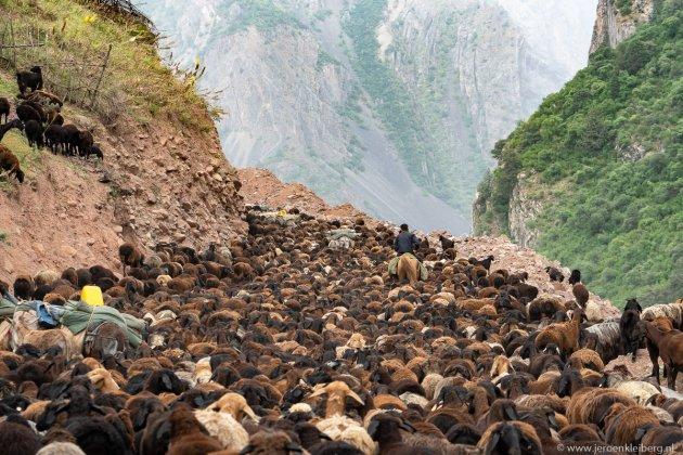 Ochtendspits op de Pamir Highway