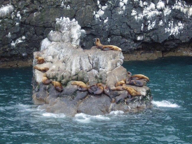 zeeleeuwenrots