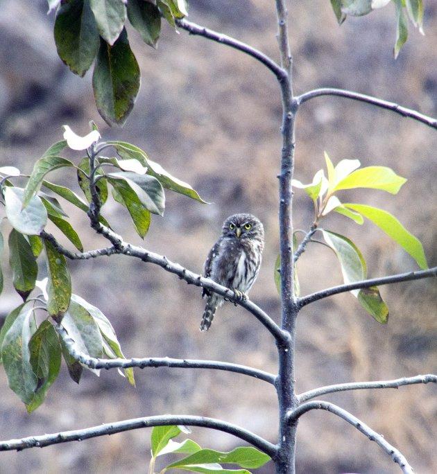 Vogels kijken in Santa Eulalia Canyon
