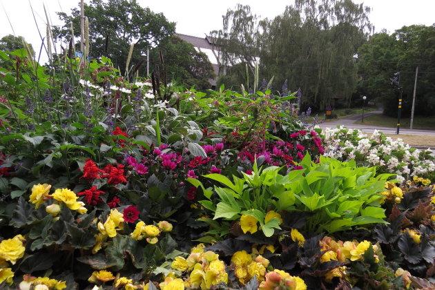 Bloemen op het eiland Djurgården