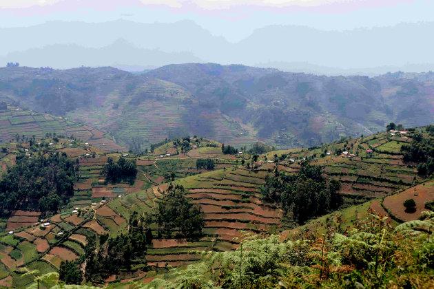 Landbouwterrassen