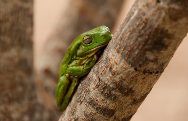 Een groene vriend op je slaapzak