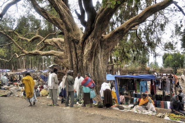 Markt onder de boom