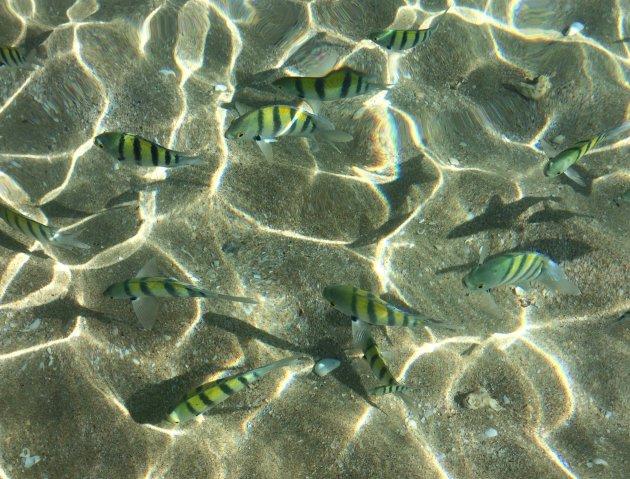 Visjes tussen je tenen