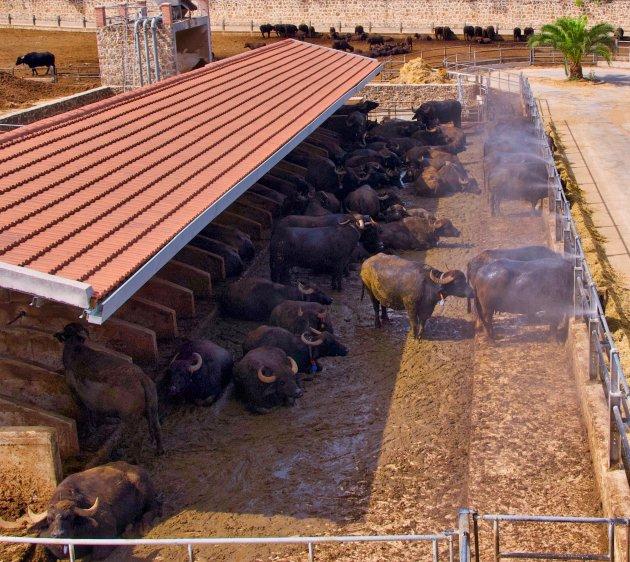 Mozarella Farm in Paestum