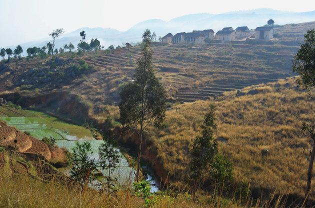Rijst en terrassen