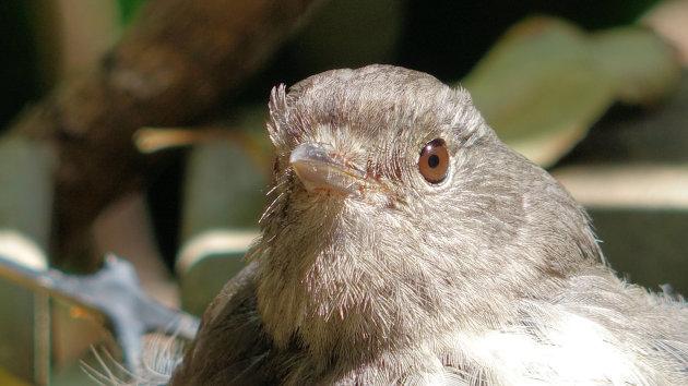 Motuarara Island: vogelparadijs