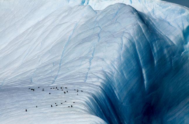 Pinguïns bij de afgrond!