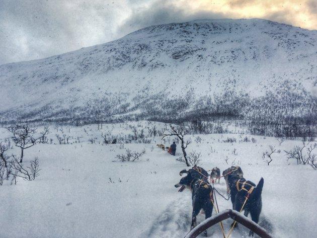 Met de hondenslee door de sneeuw