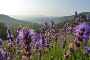 De 5 meest romantische plekken voor een huwelijksaanzoek in en rond Agriturismo Verdita