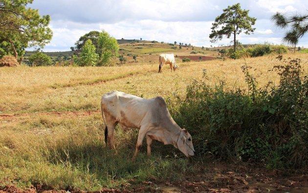 Landschap nabij Kalaw