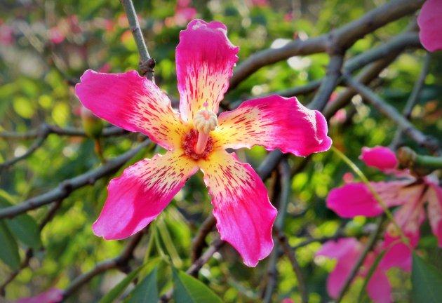 Gewoon een mooie bloem