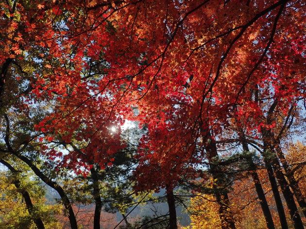 Kleurrijk Zuid Korea