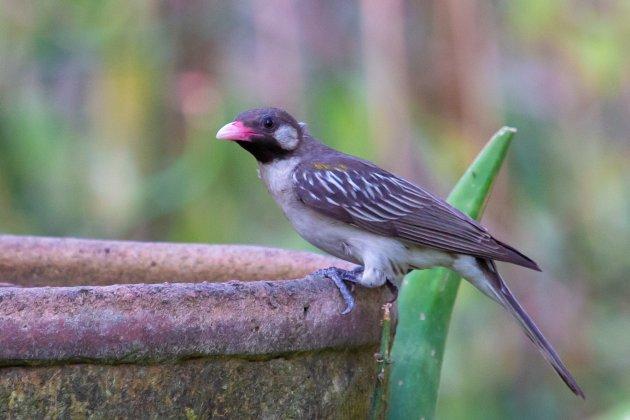 Een zeer bijzondere vogel