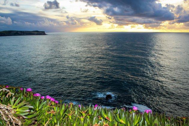 Bloemenweelde aan de kust
