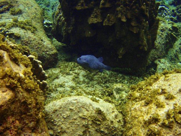 Anakena – Paaseiland – onder de wateroppervlakte