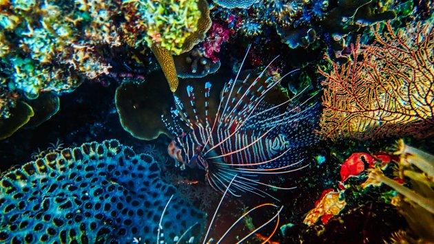 Bohol Onderwater 2