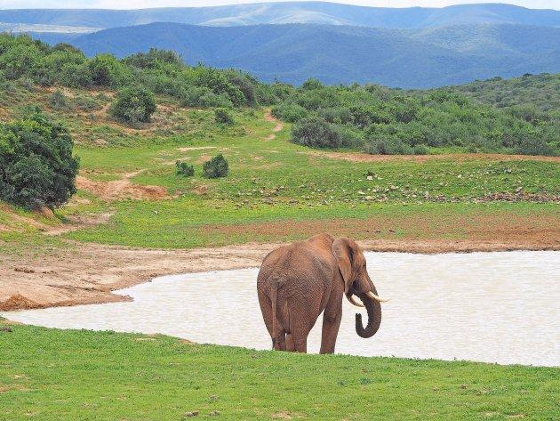 Addo, home of the elephants