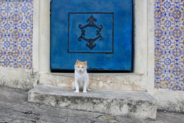 Op straat valt er genoeg te zien in Olinda
